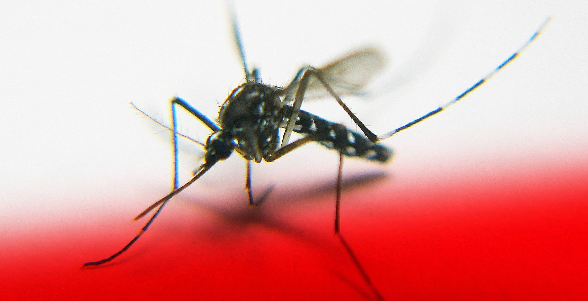 Zika Virus and Pregnancy: What You Need to Know